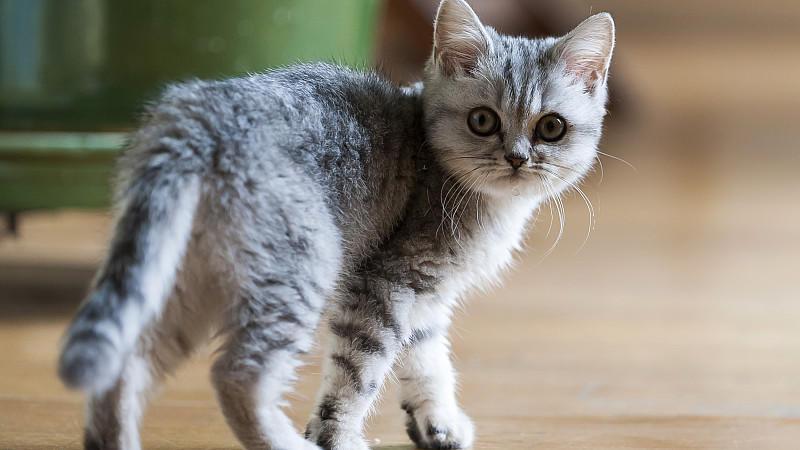 prozess in augsburg 18 katzen in mietwohnung rechtfertigen k ndigung