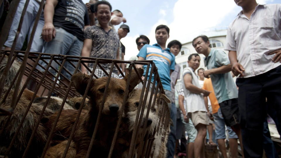 epa04813618 A picture made available 22 June 2015 shows people looking at a cage of dogs to be sold in a market in Yulin in south China's Guangxi Zhuang Autonomous Region, 21 June 2015, one day ahead of the summer solstice, the peak time of the local