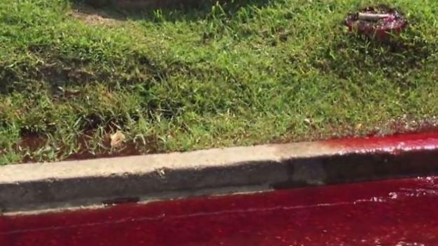 Horror-Entdeckung: Dunkelrotes Blut fließt aus Beerdigungsinstitut auf die Straße
