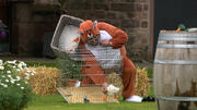 Fuchs, wer hat das Huhn gestohlen?