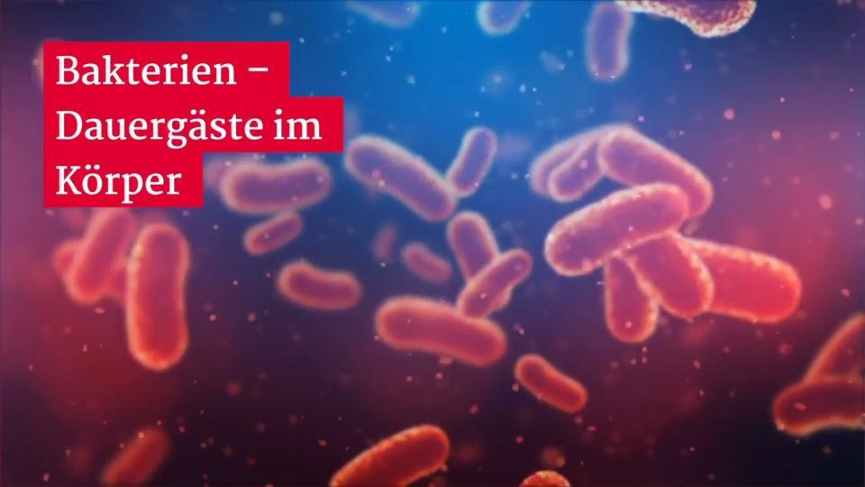 Fleischfressende bakterien im meer