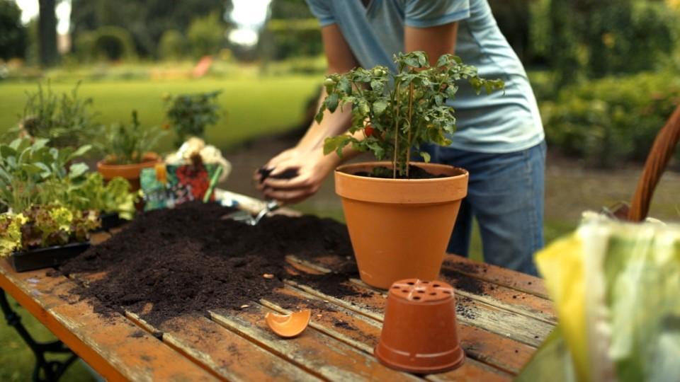 Gartenkult Bei Rtl Living