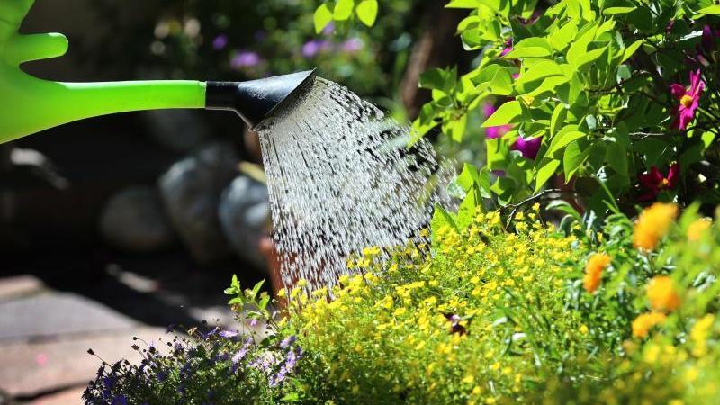 An heißen Tagen benötigen Pflanzen im Garten viel Wasser - es kommt aber darauf an, sie richtig zu gießen. Foto: Karl-Josef Hildenbrand