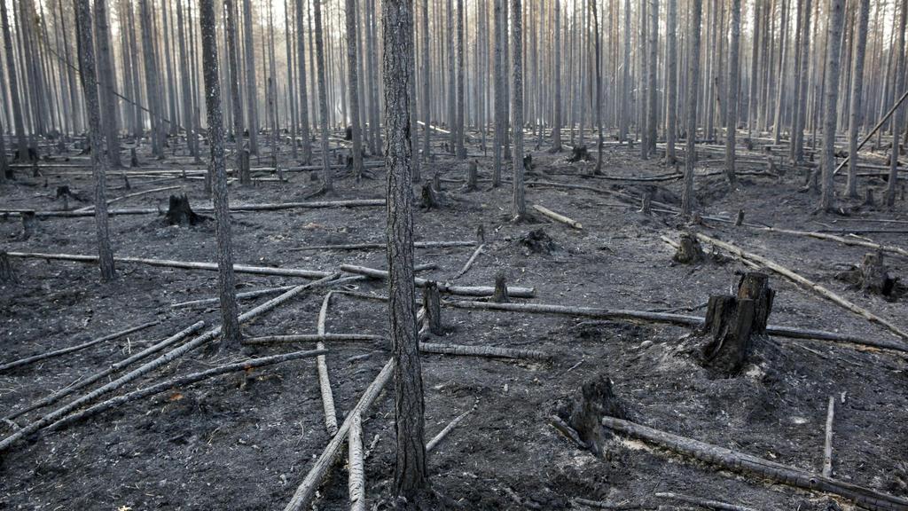22.07.2018, Schweden, Angra: Ein ausgebrannter Wald im Bezirk Ljusdal. Über Schwedens Wäldern liegt weiter dichter Qualm. So dicht, dass die Löschflugzeuge teils nicht abheben können. Trotzdem gibt es erstmals seit Tagen gute Nachrichten. Die heftige