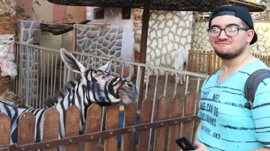 """Dieses Foto lud Student und Zoobesucher Mahmoud A. Sarhan bei Facebook hoch. Der Post verbreitete sich rasend und immer mehr Nutzer zweifelten die Echtheit des """"Zebras"""" an."""