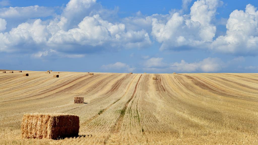 02.08.2018, Thüringen, Nordhausen: Dicke Cumulus Wolken haben sich hinter einem Feld aufgetürmt. Nach vielen trockenen Tagen hoffen die Bauern weiterhin Regen für die trockenen Felder. Foto: Frank May/dpa +++ dpa-Bildfunk +++