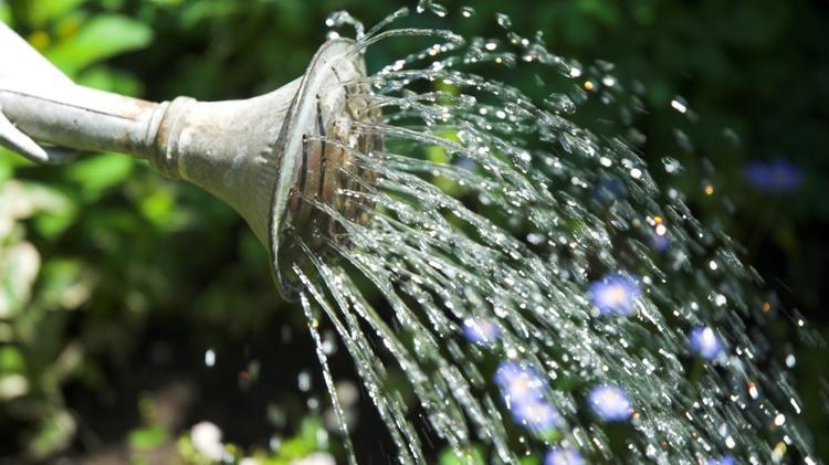 Garten-Tipps für die Mega-Hitze - Nur DANN sollten Sie jetzt Ihre Pflanzen gießen