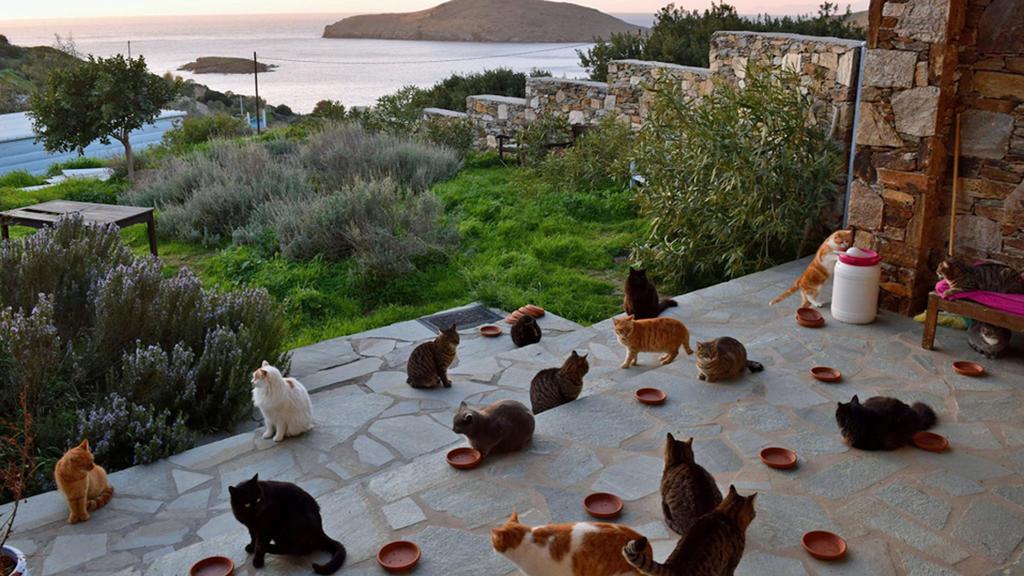Katzenheim Griechenland