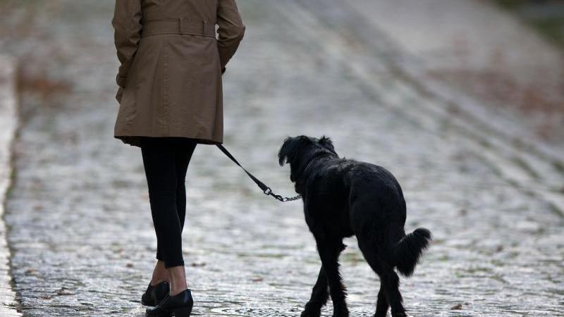 Eine Frau geht mit ihrem Hund über die Straße. Foto: Jens Büttner/Archiv
