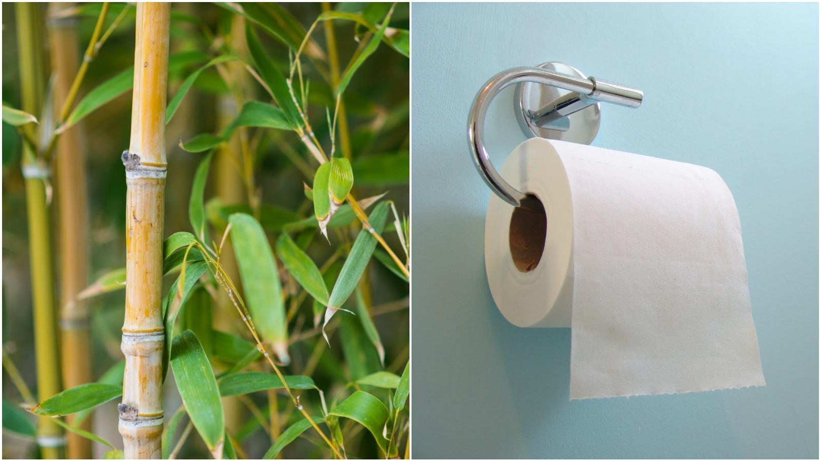 Ist Bambus-Klopapier die umweltschonendere Alternative?