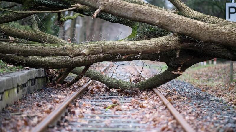 Ein umgestürzter Baum