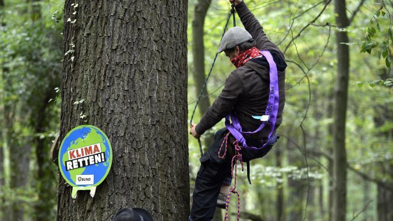 Aktivisten bauen im Hambacher Forst neue Häuser in den Bäumen. Foto: Ina Fassbender