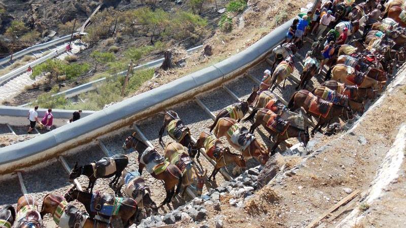 Viele Esel auf Santorin-Treppen