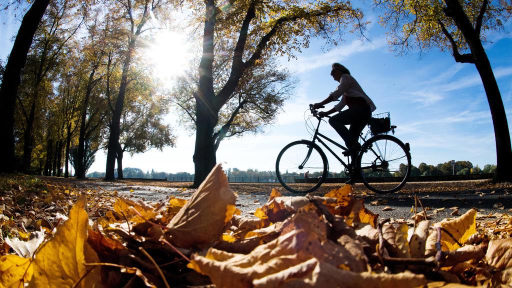 Eine Radfahrerin fährt bei Sonnenschein durch eine herbstlich verfärbte Allee.