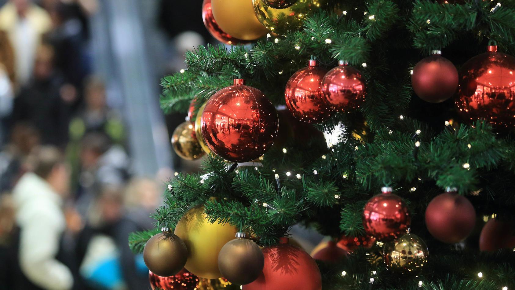 Jedes Jahr die gleiche Frage: Welcher Baum soll's werden?