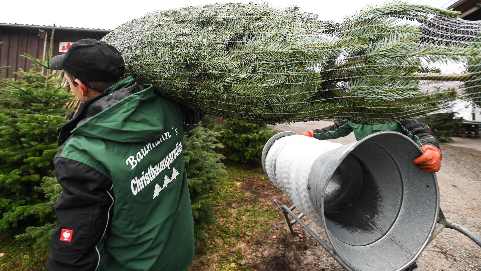 In Deutschland gibt es vier verschiedene Steuersätze für Weihnachtsbäume.