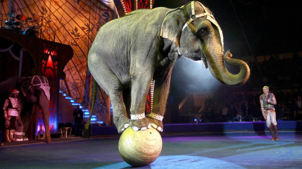 FILE - ILLUSTRATION - epa02946460 Elephant trainer Andrey Dementjev-Kornilov performs with an elephant during a gala show at the World Circus festival in Moscow, Russia, 02 October 2011. 140 artists from 10 countries take part in World Circus festiva