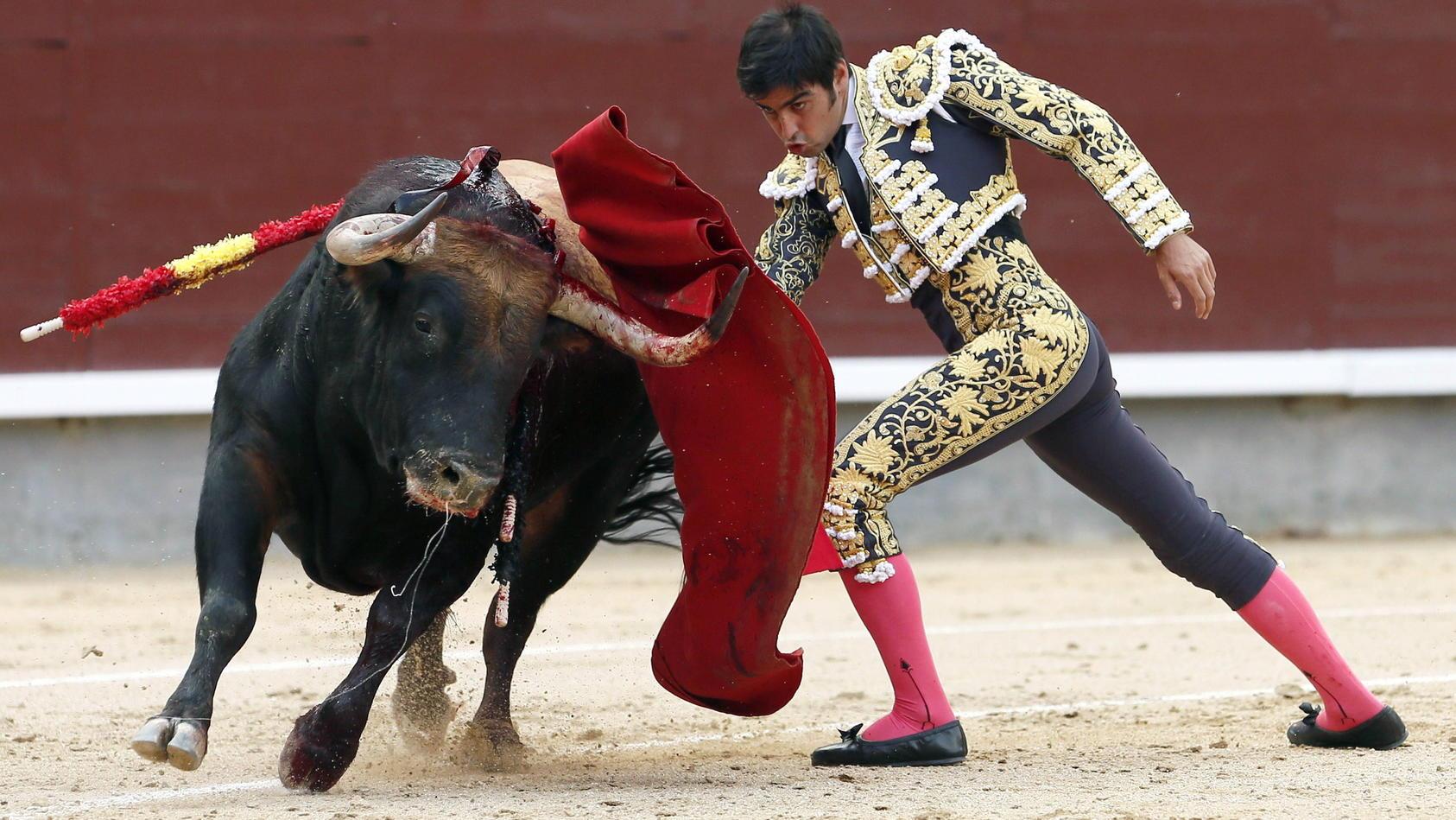 Tierschützer hoffen, dass die Corona-Krise das Ende des Stierkampfs in Spanien beschleunigt
