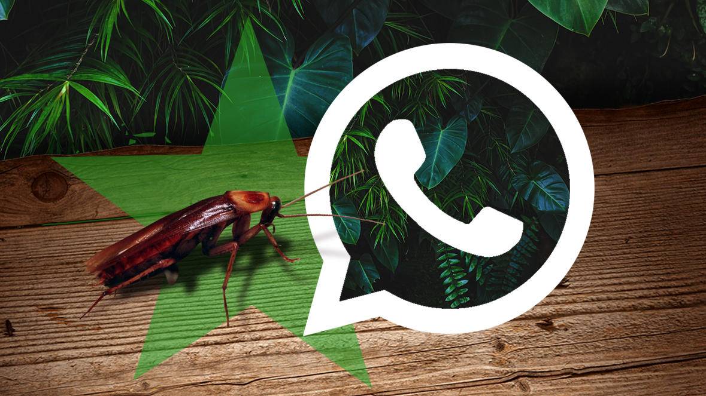 Dschungel WhatsApp Newsletter