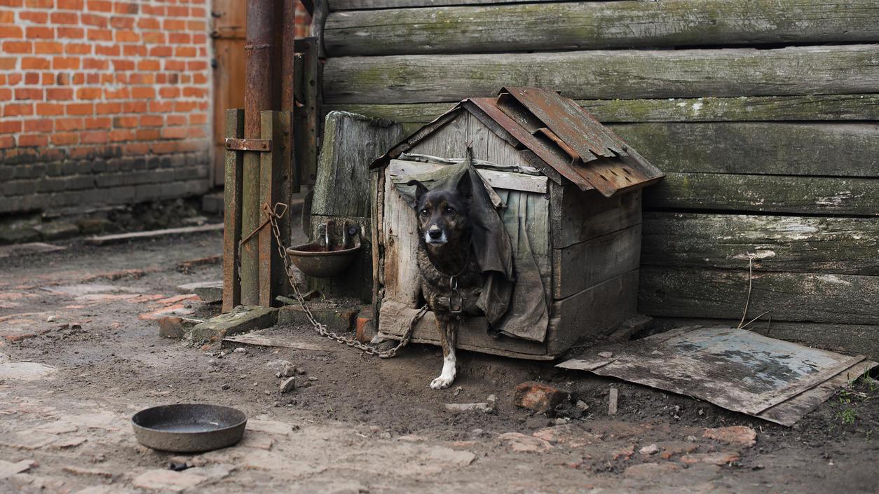 Tierquälerei wird häufig nicht bestraft, da Tiere im Strafgesetzbuch als Sache gelten.