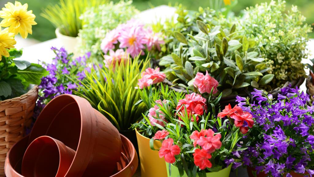 Pflanzen für den Balkon: Auf die Sonnenstunden kommt es an