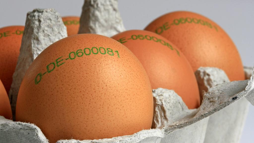 braune Bio-Eier mit Herkunftsstempel in einem Eierkarton, Herkunftsland Deutschland, Deutschland | brown organic eggs, Germany | Verwendung weltweit
