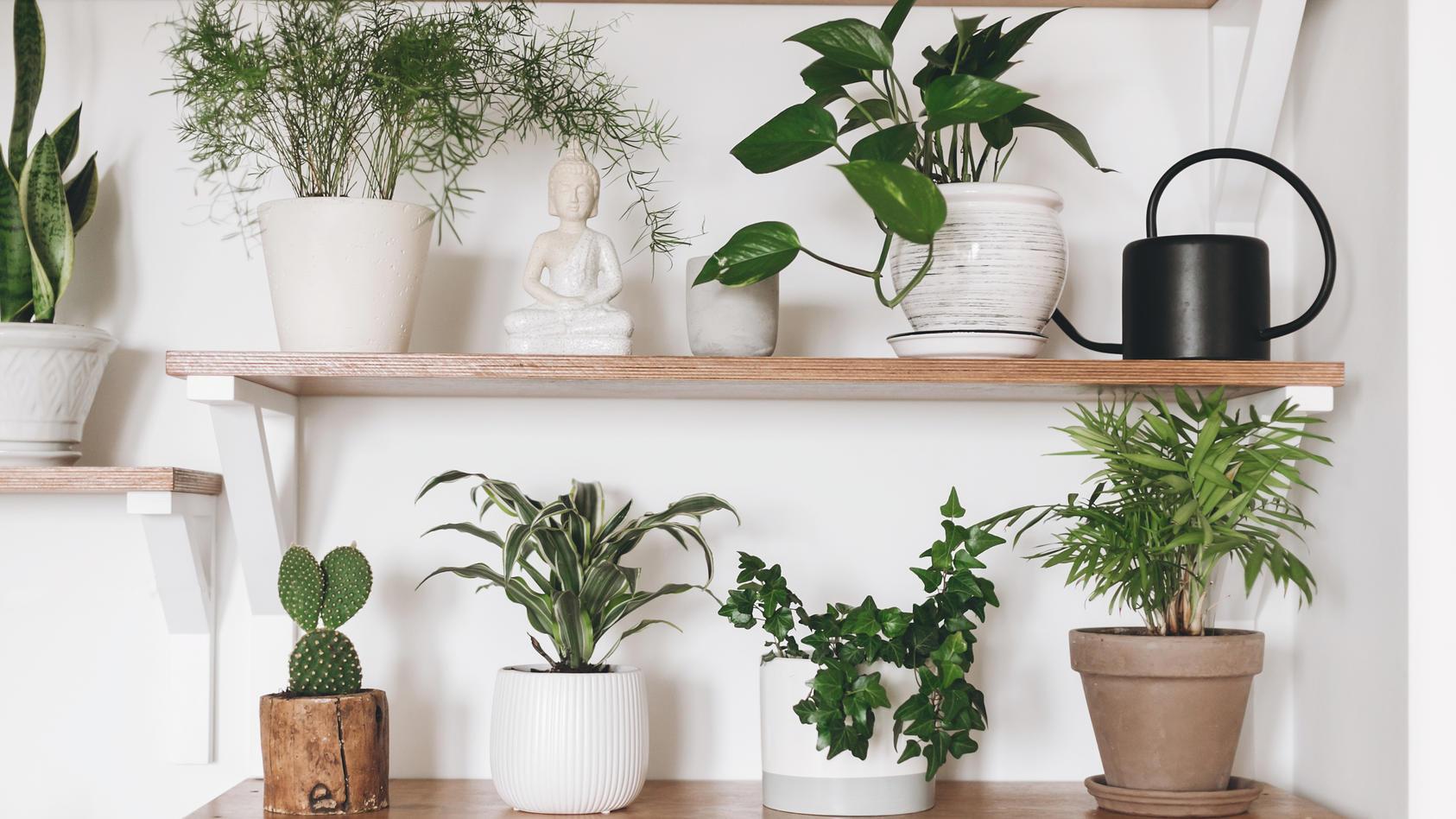 Wir stellen dekorative Zimmerpflanzen vor, die wenig Pflege benötigen.