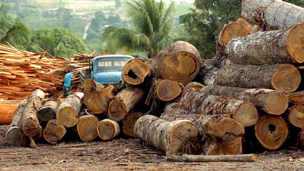 """ARCHIV - 17.03.2019, Brasilien, Altamira: Eine Holzfabrik in Brasilien (undatiertes Archivfoto). (zu dpa:""""Angriff auf die grüne Lunge: Amazonas-Regenwald schrumpft stark"""" vom 20.03.2019) Foto: epa efe Marcelo Sayao/EFE/dpa +++ dpa-Bildfunk +++"""