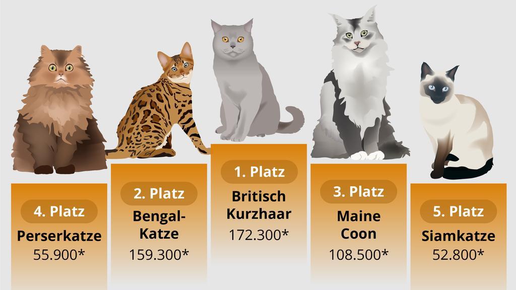 Das sind die beliebtesten Katzenrassen im Netz