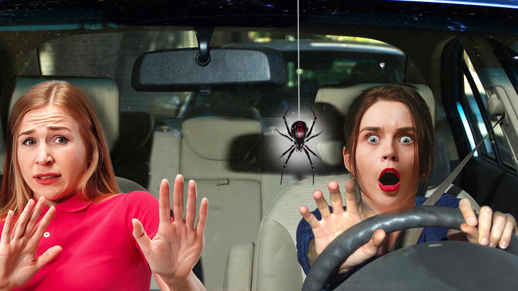 Schon eine kleine Spinne im Auto genügt, um Panik auszulösen.