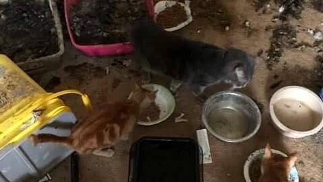 Die 26-jährige Frau hat die Tiere über Monate hinweg gequält und vernachlässigt.