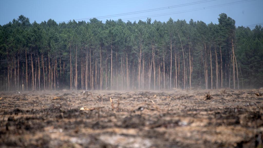 23.04.2019, Brandenburg, Fichtenwalde: Staub zieht über eine vertrocknete ehemalige Waldfläche an der Autobahn A9, die bei einem Feuer 2018 abgebrannt war. Die Waldbrandgefahr in Brandenburg bleibt sehr hoch. Das liegt auch am starken Wind, der Feuer