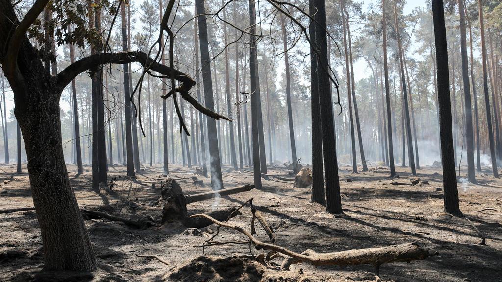 ARCHIV - 04.07.2018, Sachsen-Anhalt, Serno: Letzte Brandnester qualmen noch nach einem Waldbrand. (zu dpa ««Situation ist brenzlig» - Wälder kämpfen erneut mit Trockenheit») Foto: Jan Woitas/ZB/dpa +++ dpa-Bildfunk +++
