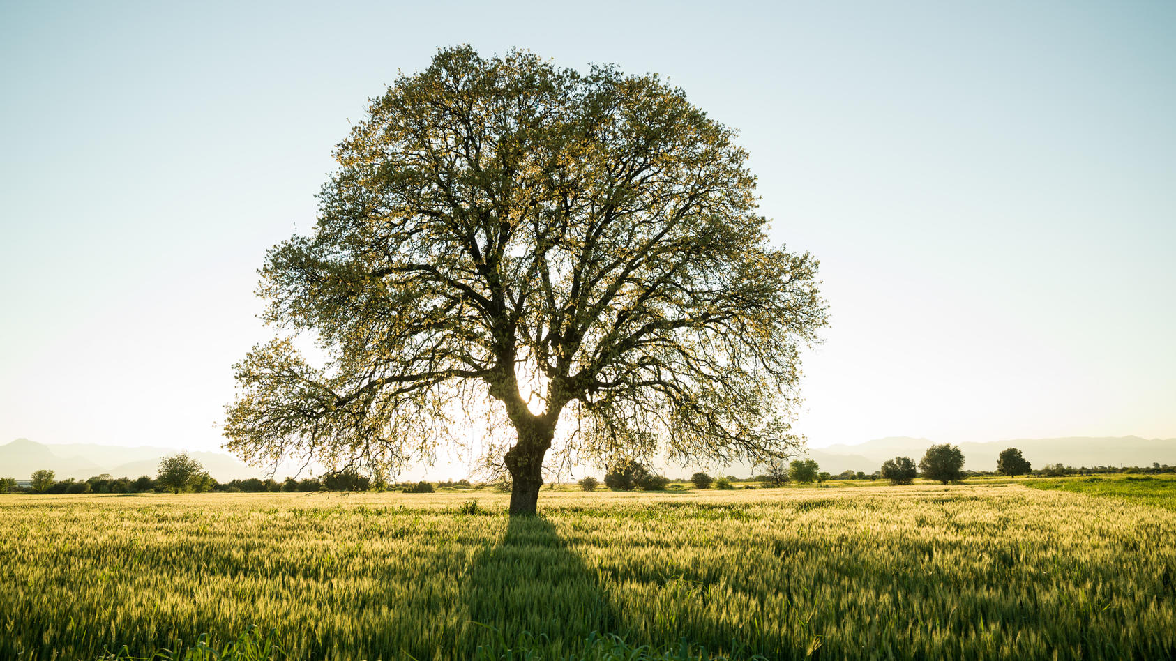 Der Mensch braucht Bäume wie die Luft zum Atmen. Und Bäume sind reine Wunderwerke der Natur. Hochkomplexe Pflanzen, deren Lebensfunktionen den unseren ähnlicher sind, als wir bisher angenommen haben.