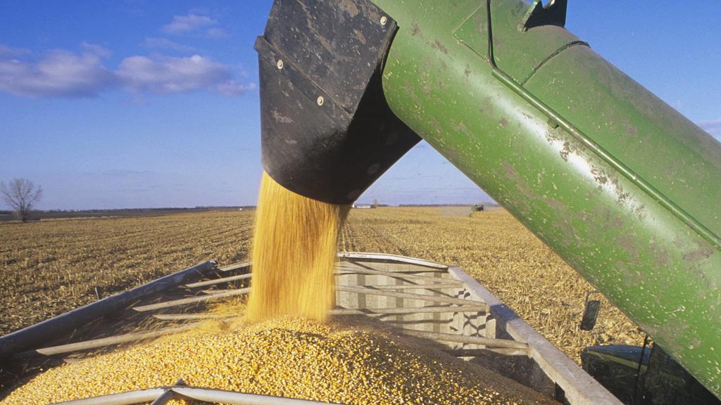Förderanlage für Mais