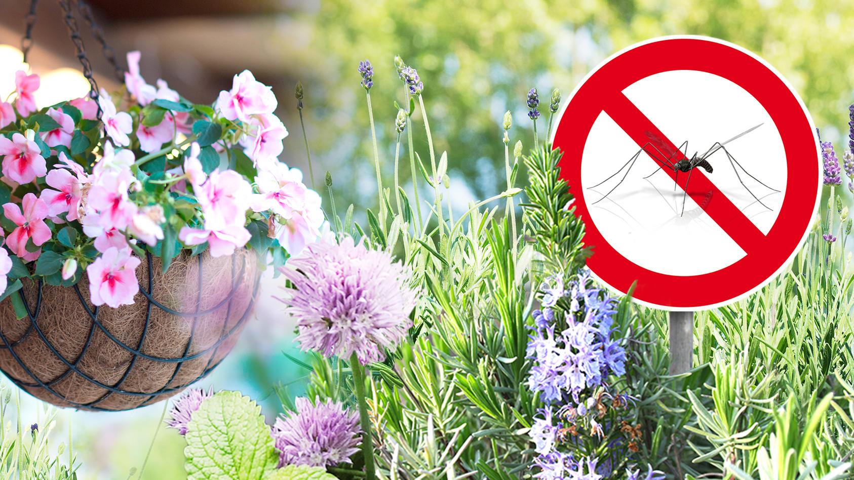 schutz gegen mücken