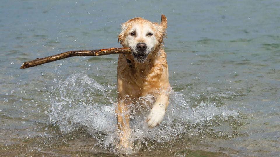 Für Hunde ist das Spielen im Wasser eine tolle Möglichkeit zur Abkühlung.
