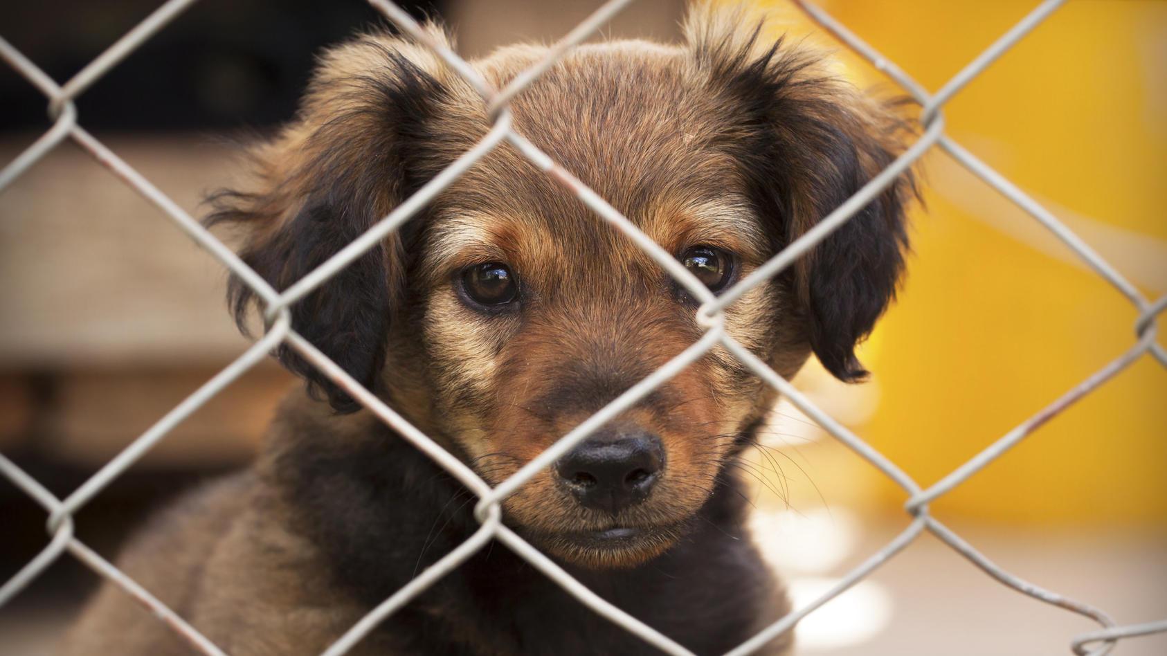 Wenn die Besitzer nicht zuhause sind, müssen es Hunde und Katzen auch alleine aushalten können.