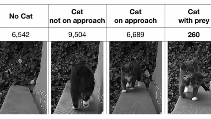 Katzenklappe2