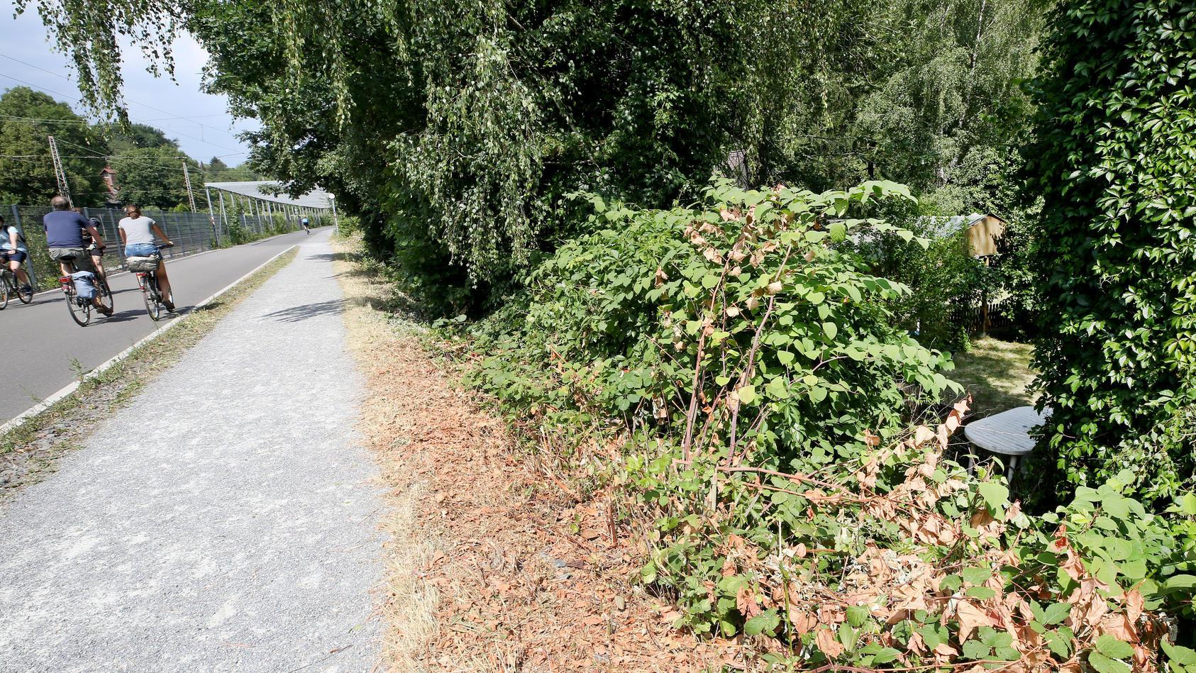 In der Nähe dieses Gebüsches, das am Radschnellweg liegt, soll eine junge Frau von einer Gruppe Jugendlicher überfallen und sexuell missbraucht worden sein.