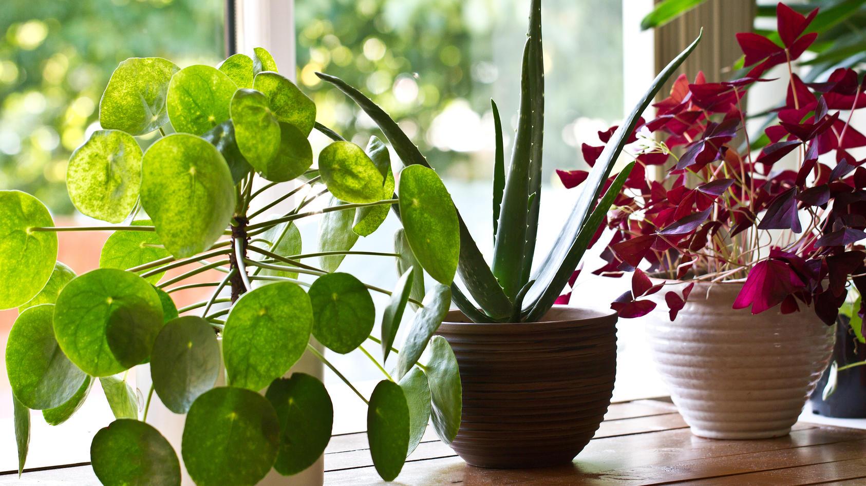 Die richtigen Zimmerpflanzen sind nicht nur gut für die Seele, sondern auch fürs Raumklima.