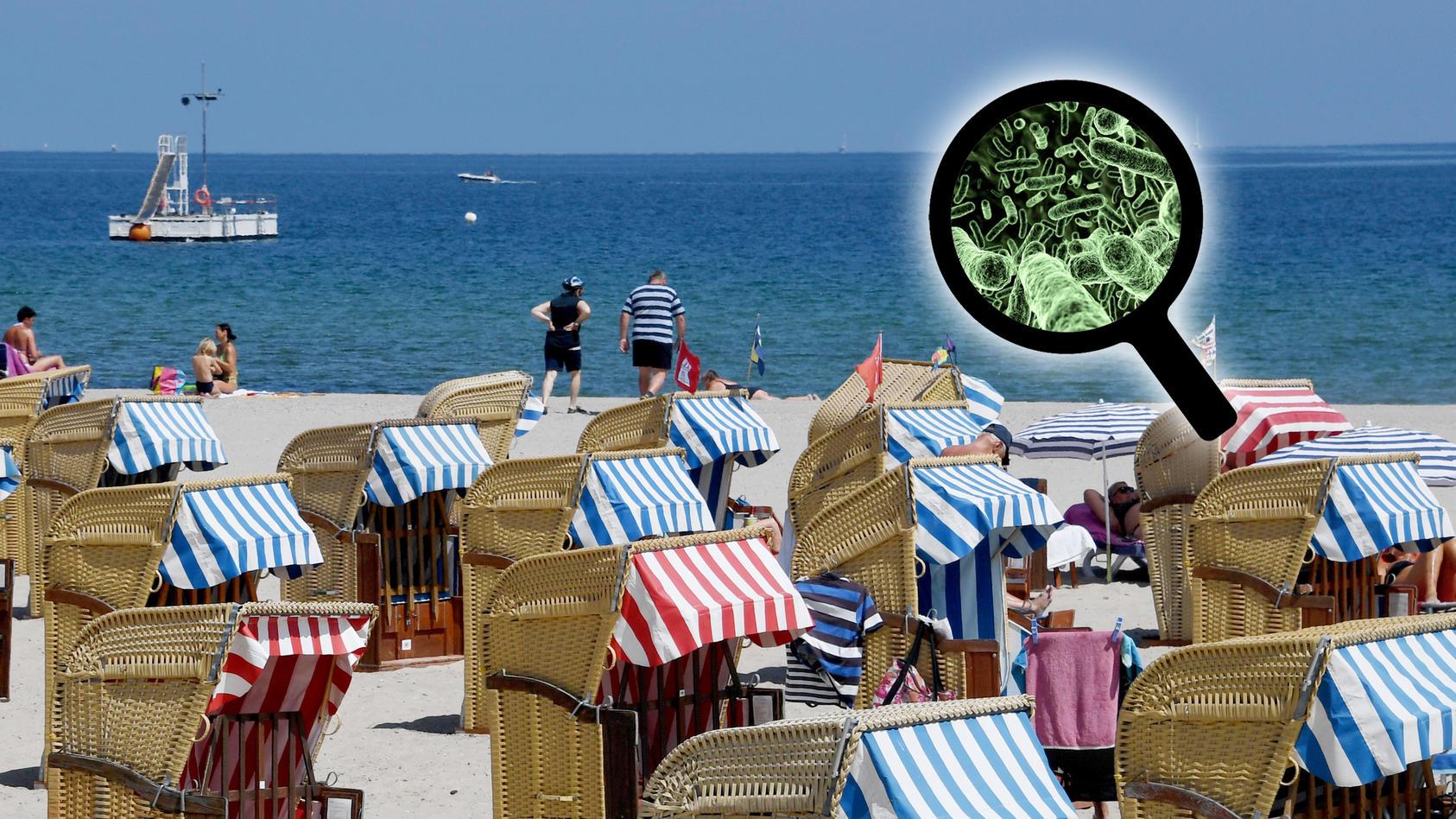 Auch an der Ostsee kommen Vibrionen vor – vor allem, wenn es heiß ist!