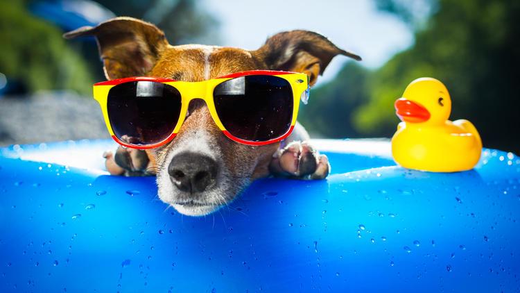 UV-Strahlung schadet Tieren  - Sonnenschutz für Hunde? Gibt es!