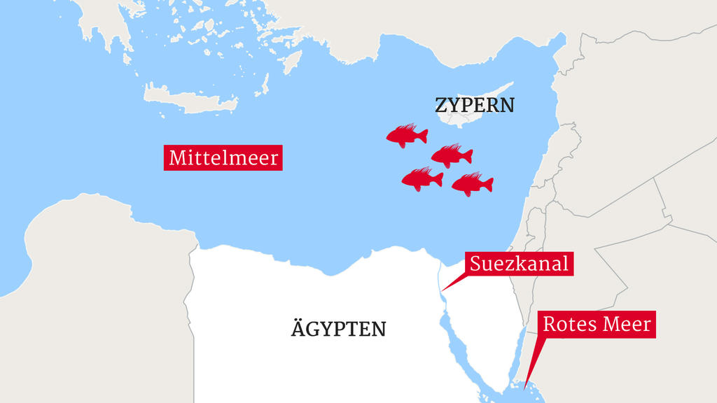 Die Route der invasiven Feuerfische