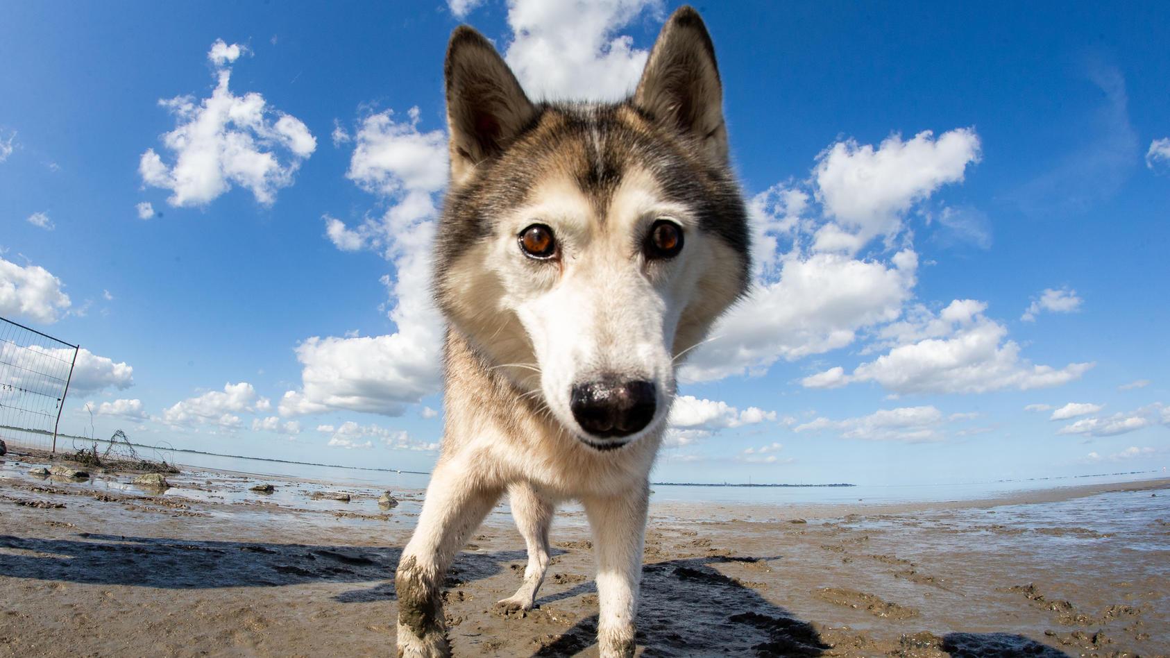 Wer mit dem Hund in den Urlaub fahren will, sollte ein paar Dinge beachten.