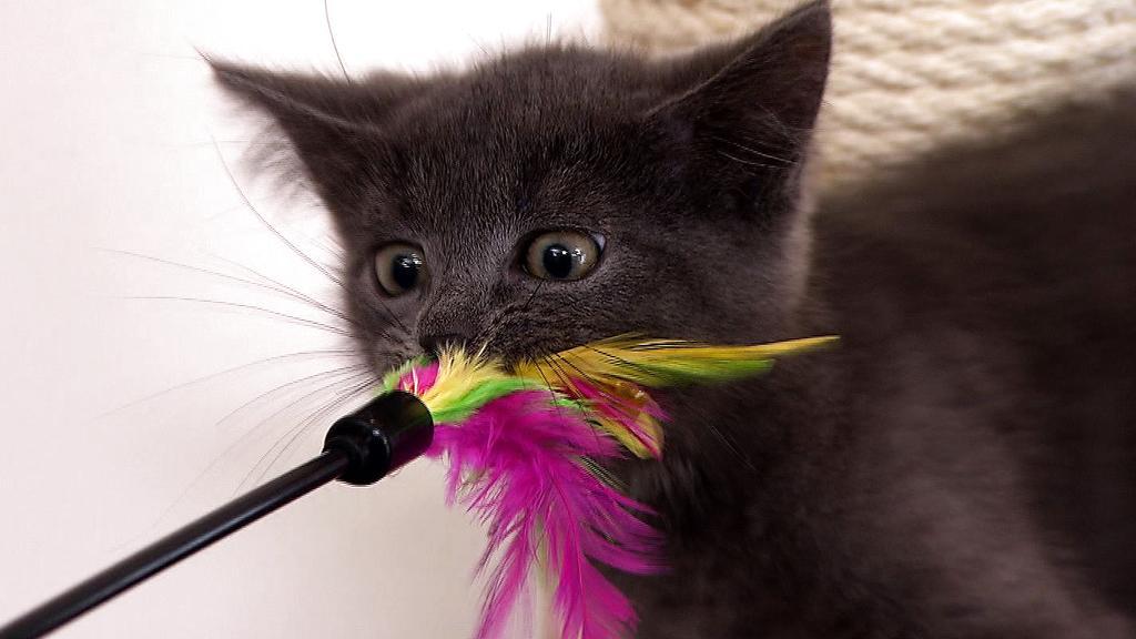 Katzenspielzeug: Spielen mach Spaß!