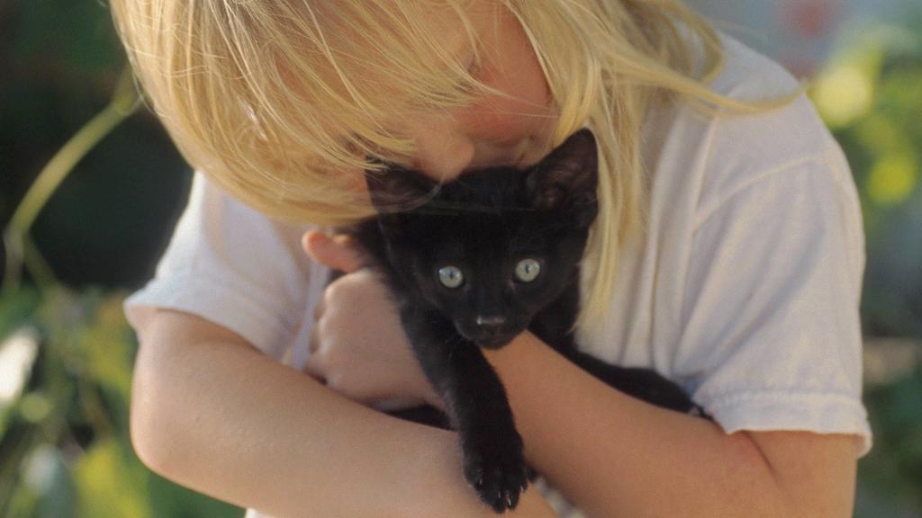 Kuschel- und Streicheleinheiten sind gut für die Katze-Mensch-Beziehung