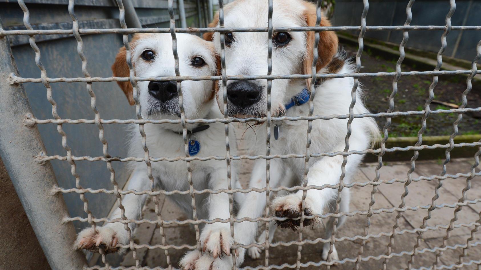 Auf Mallorca dürfen ausgesetzte Heimtiere künftig nicht mehr eingeschläfert werden. (Symbolbild)