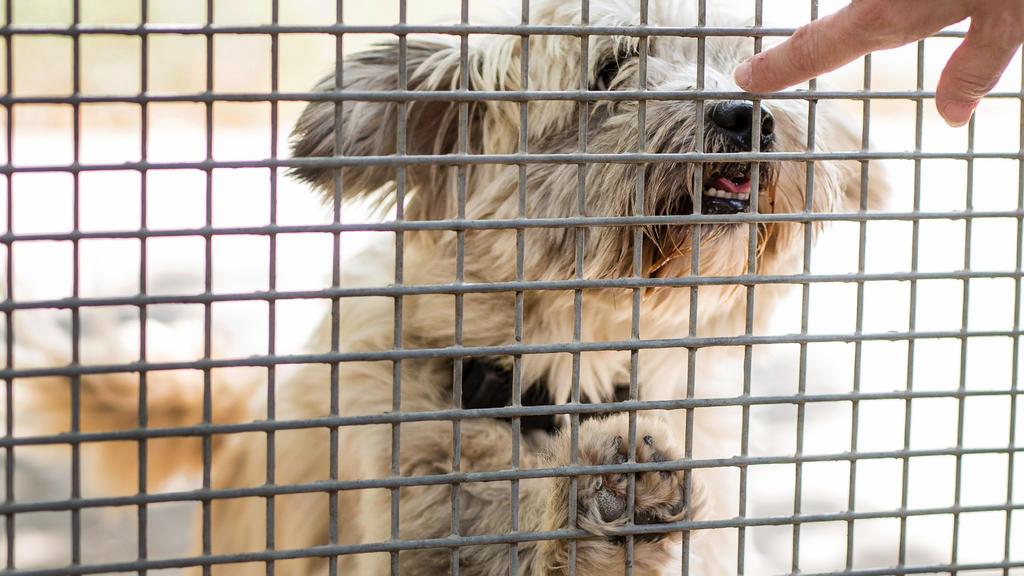 """ARCHIV - 17.08.2018, Böblingen: Ein Hund schnüffelt im Tierheim an der Hand einer Pflegerin.  (zu dpa: """"Ausgesetzte Sommerferien-Tiere"""") Foto: Christoph Schmidt/dpa +++ dpa-Bildfunk +++"""