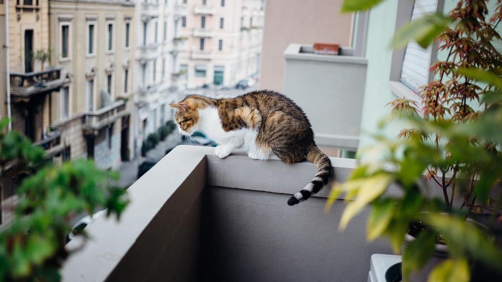 Katze auf dem Balkon